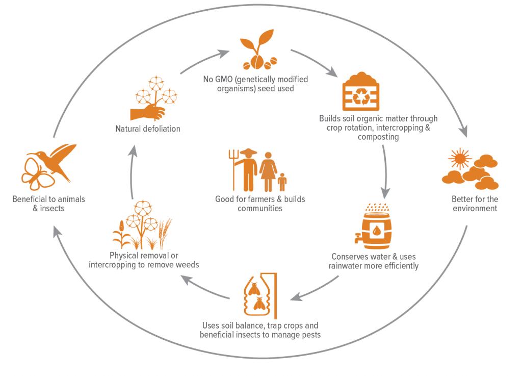 Organic Cotton Farming Infographic